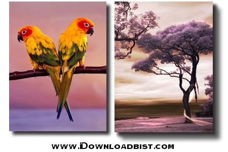 مجموعه ۲۵ تصویر زمینه بسیار زیبا در اندازه ۳۲۰×۲۴۰ براي موبایل